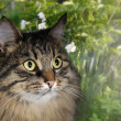 Cat in garden — Stock Photo #16854941