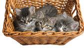 Kotě — Stock fotografie