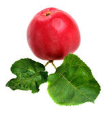 červené jablko — Stock fotografie