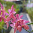 Orchid in tropical greenhouse — Stock Photo #19933319
