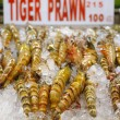 Tiger prawn - Stock Photo