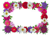 Colorful aster floral frame — Stock Photo