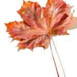 Autumn leaf — Stock Photo #2761176