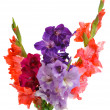 Bouquet of gladioluses — Stock Photo