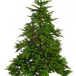 Bare Christmas tree — Stock Photo