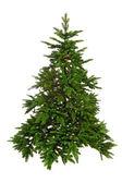 Bare Christmas tree — Stock Photo