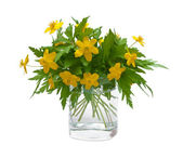 Buttercups — Stock Photo