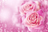 Beautiful pink roses — Stockfoto