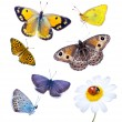 Beautiful varicoloured butterflies - Stock Photo
