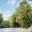Road among palms — Stock Photo
