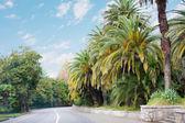 Strada tra palme — Foto Stock