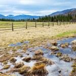 Fence near the field — Stock Photo