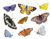 Beautiful varicoloured butterflies — Stock Photo