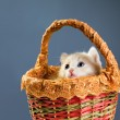 Red kittens in basket — Stock Photo