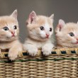 Stock Photo: Three red kittens