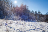 Winter sunny forest — Stock Photo