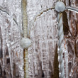 Stock Photo: Fence frozen in ice