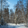 Foto Stock: Winter in forest
