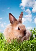 小兔子 — 图库照片