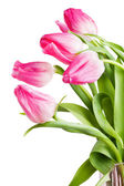 Flowers tulips — Stock Photo