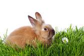 Kleine konijntje — Stockfoto