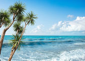 Palms by the Sea — Stock Photo