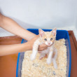 Young cat use the toilet — Stock Photo #50235255
