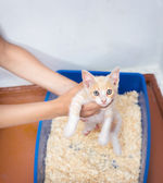 Young cat use the toilet — Stock Photo
