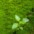 Stock Photo: Small tree, beginning of life