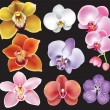 Collection of orchid flower - 图库矢量图片