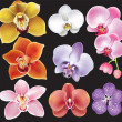 Collection of orchid flower - Stok Vektör