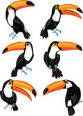 Set of toucans — Stock Vector