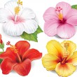 Set of Hibiscus — Stock Vector #28582665