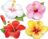 Set of Hibiscus — Stock Vector