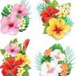 Arrangement from hibiscus flowers — Stock Vector