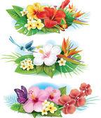 Regeling van tropische bloemen — Stockvector