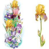 Garlands of Iris flowers — Stock Vector