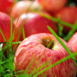 Healthy organic apples — Stock Photo #16836181