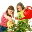Children watering plants — Stock Photo