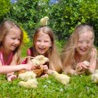 Beautiful girls with chicks — Stock Photo