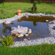 Garden pond — Stock Photo #24271965