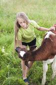 Little girl petting a calf — Stock Photo