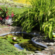 Garden Pond — Stock Photo