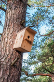 Wooden birdhouse on pine — Stock Photo