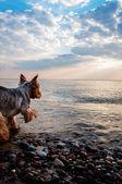 Chien sur la plage — Photo