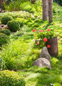 Beautiful blooming garden in summer — Stock Photo