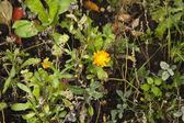 Gul blomma. — Stockfoto