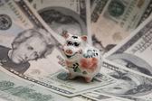 Small pig, big dollar. — Stock Photo