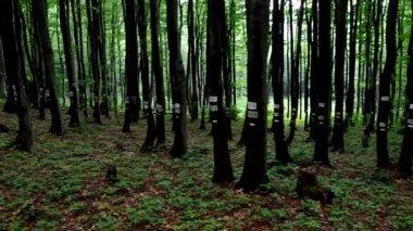 Bosque de la haya — Vídeo de Stock