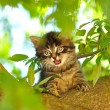 Stock Photo: Little kitten on tree